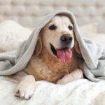 Seguro para perros, tu mascota se merece lo mejor